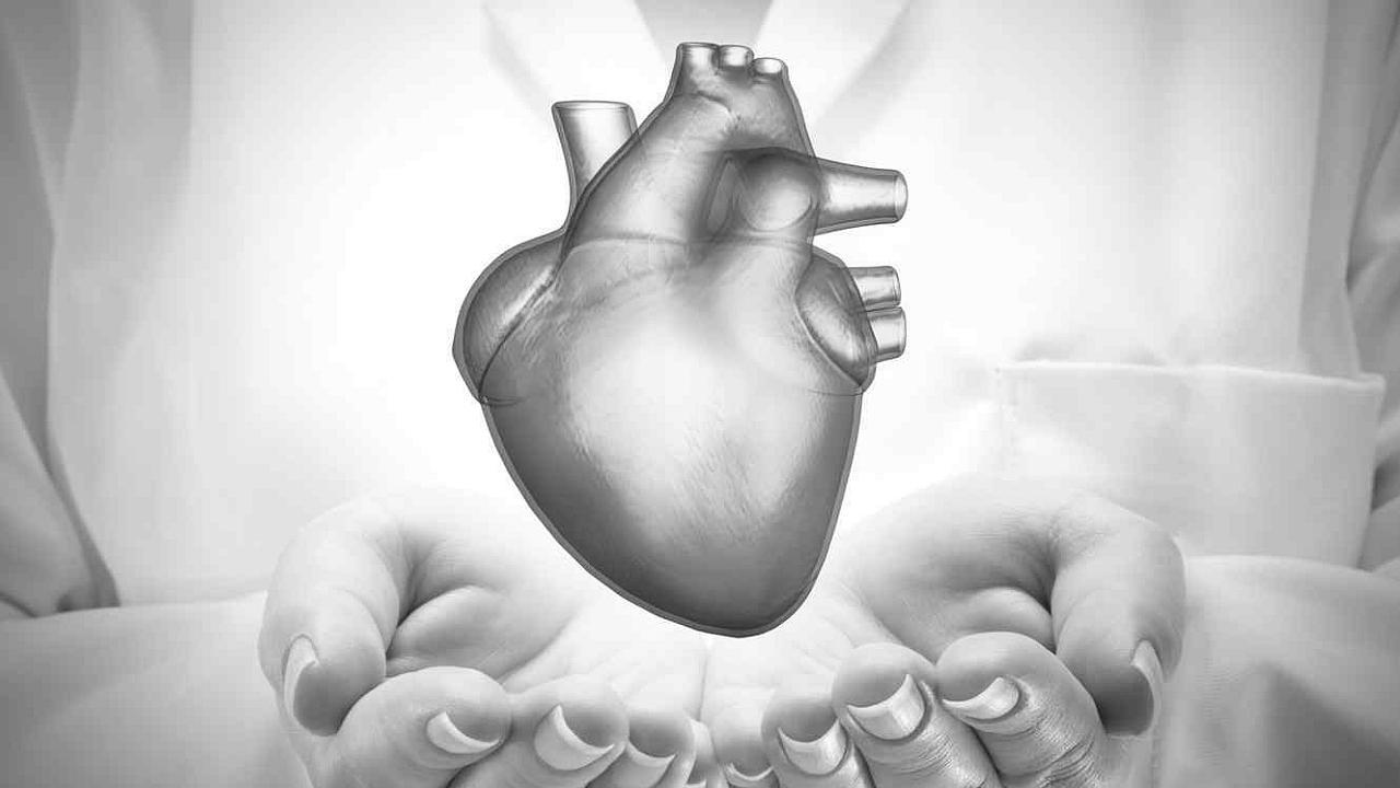 Amor del corazon