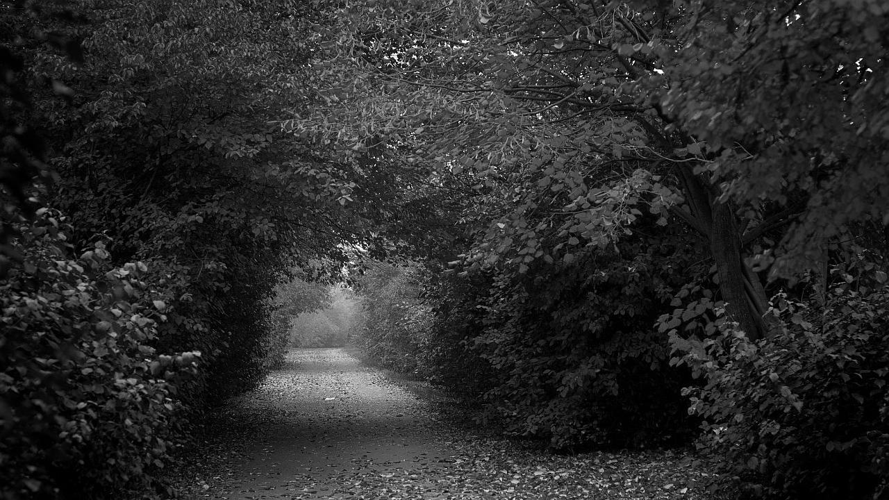 Camino de amor