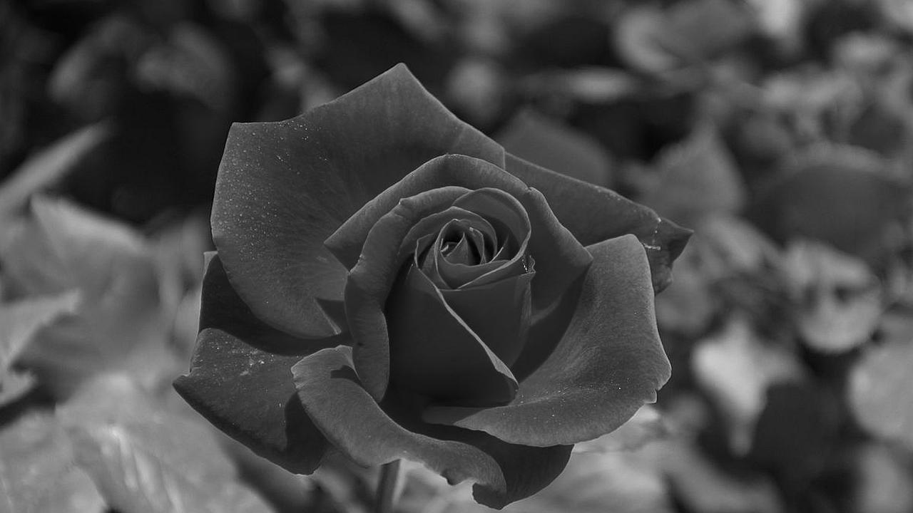 La rosa y la espina