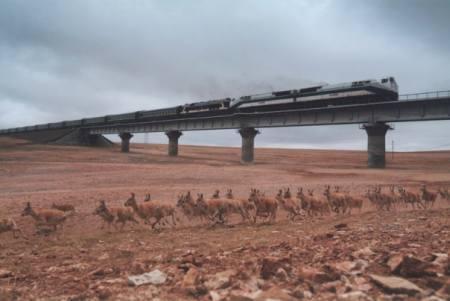 Vemos un tren elevado que pasa y debajo del puente pasa una manada de antilopes