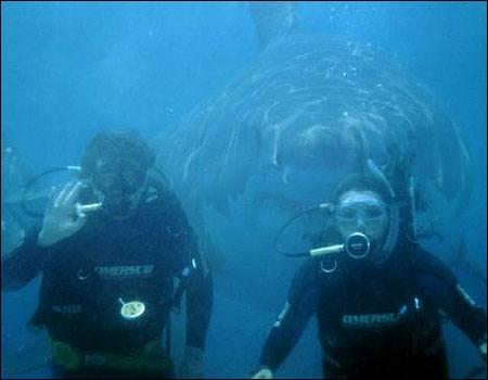 Vemos como una pareja de buzos tiene atrás a un  inmenso tiburón