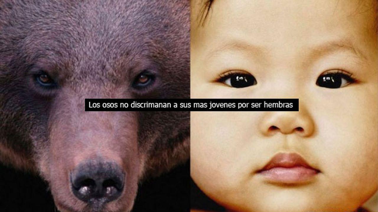Animales enseñándole a los seres humanos a como ser personas