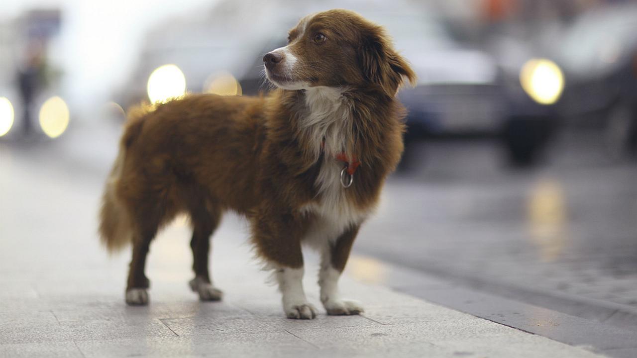 Channel, el perro más viejo del mundo