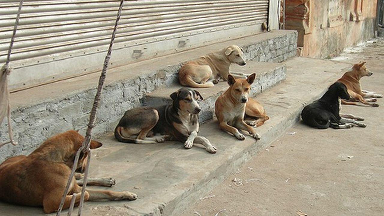 El 27 de julio Dia Internacional del Perro Callejero