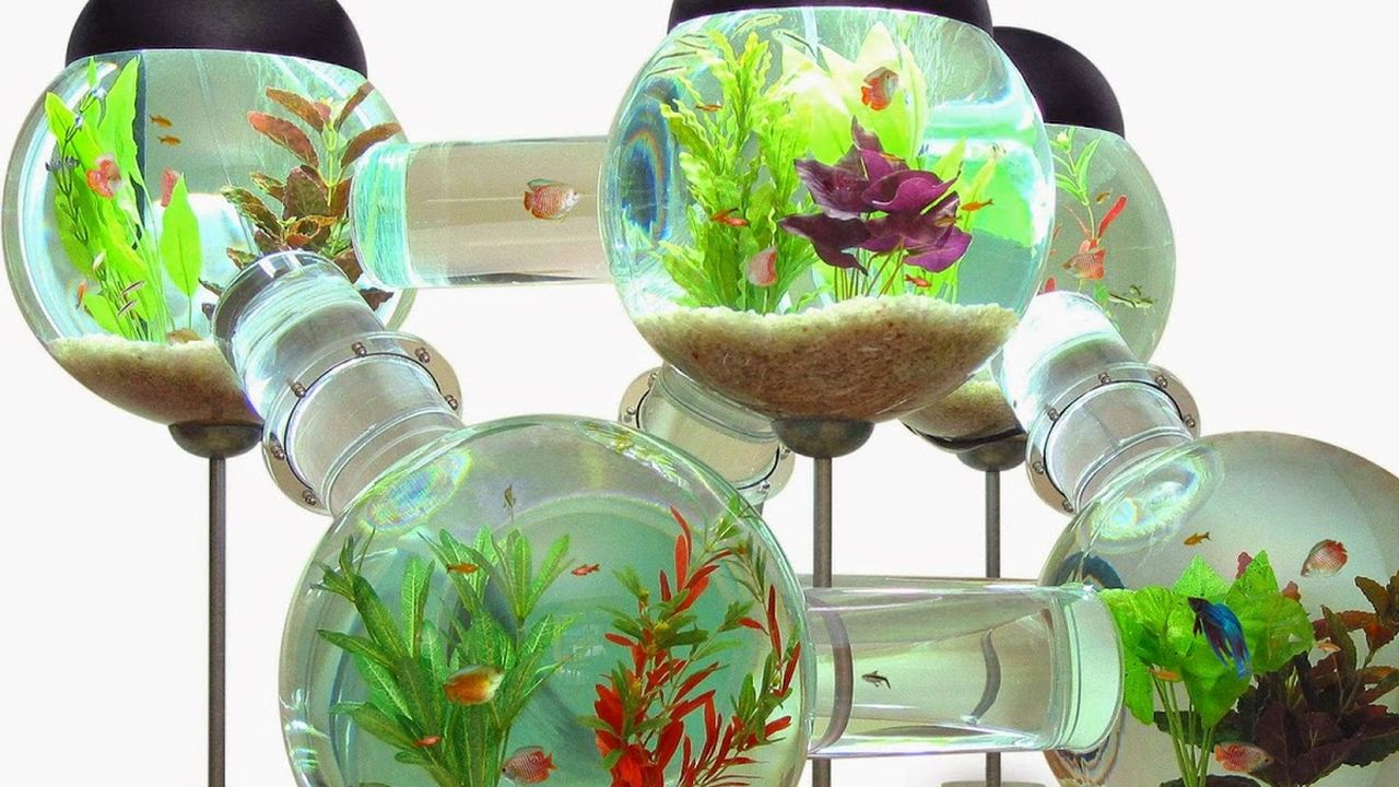 El acuario laberinto