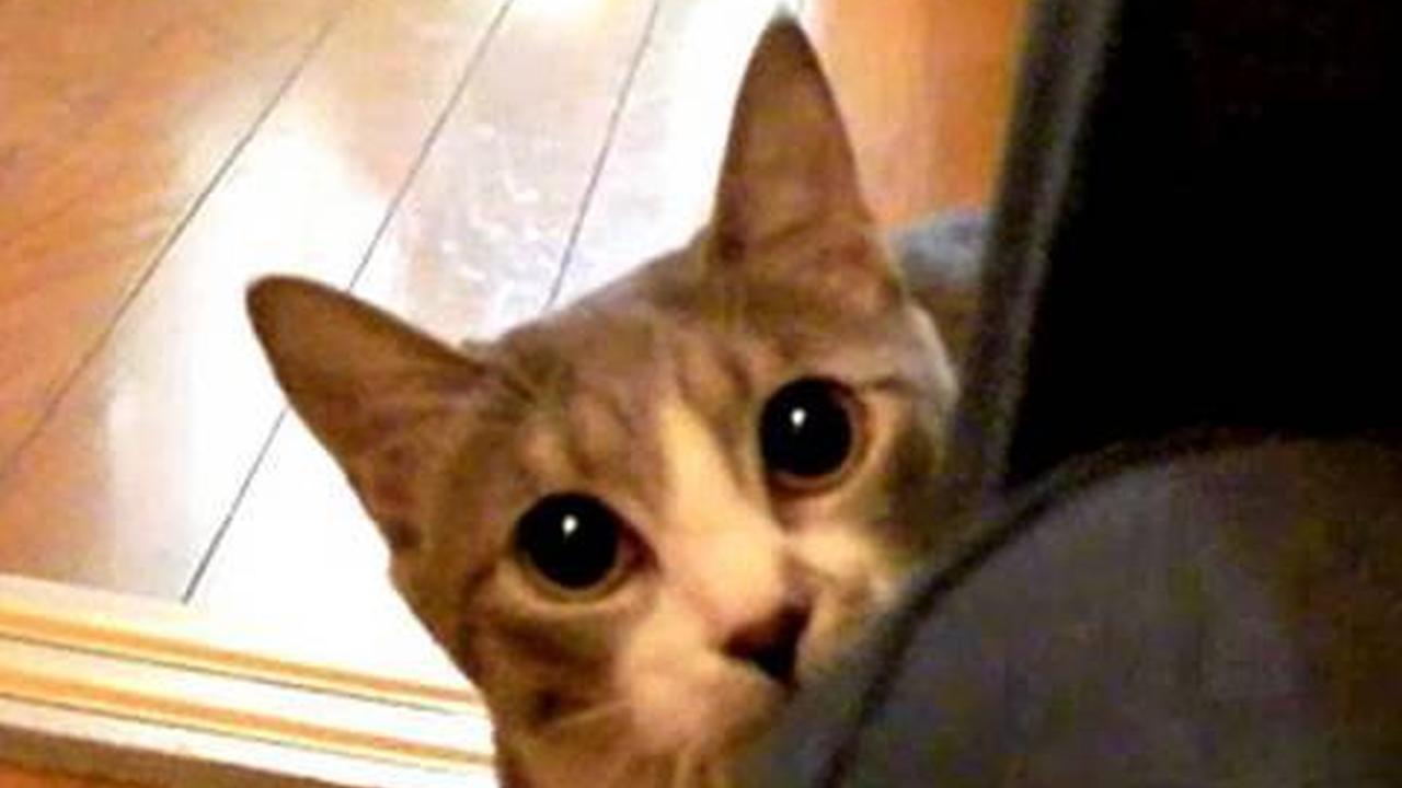 Resultado de imagen de gato ninja