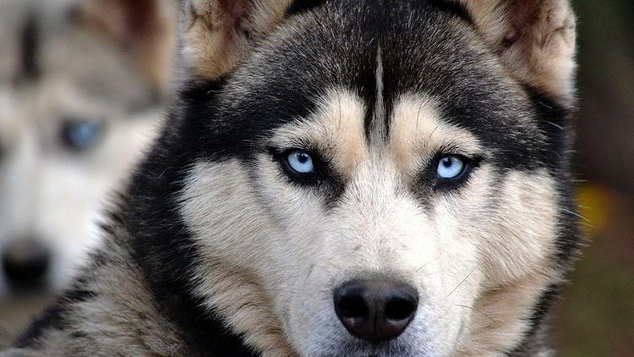 El Perro Jefe