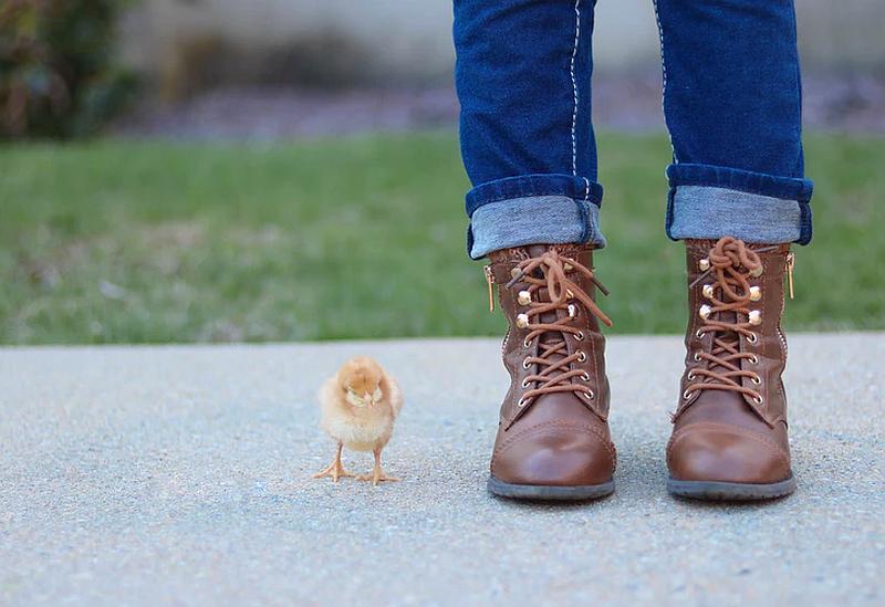 Tenemos las botas de un hombre y un jin remangado un poco y un pequeño pollito a su lado