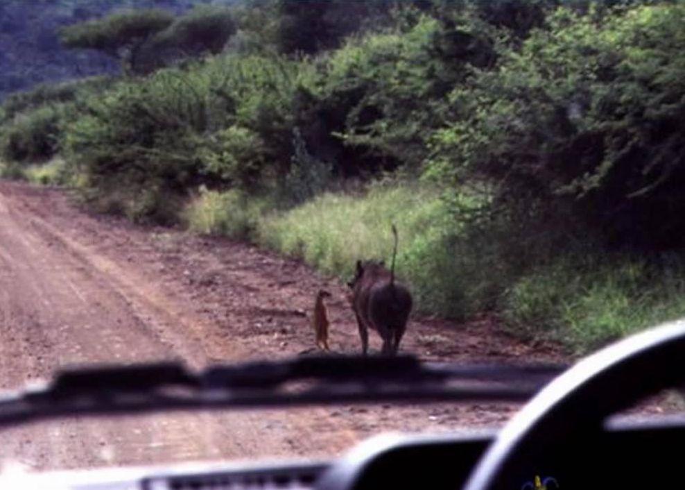 Dos animales en la mitad de un camino