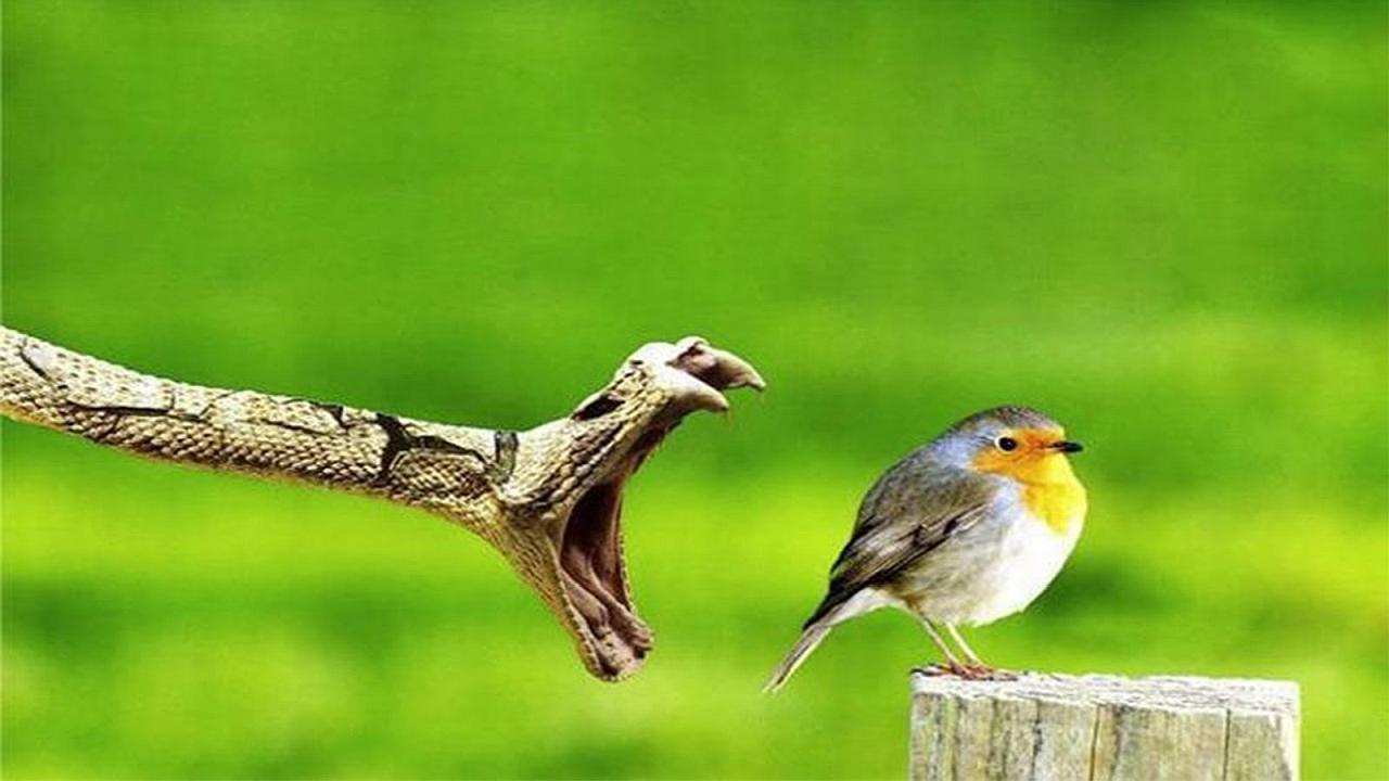 Una serpiente a punto de comerse un hermoso y gordito pajarito