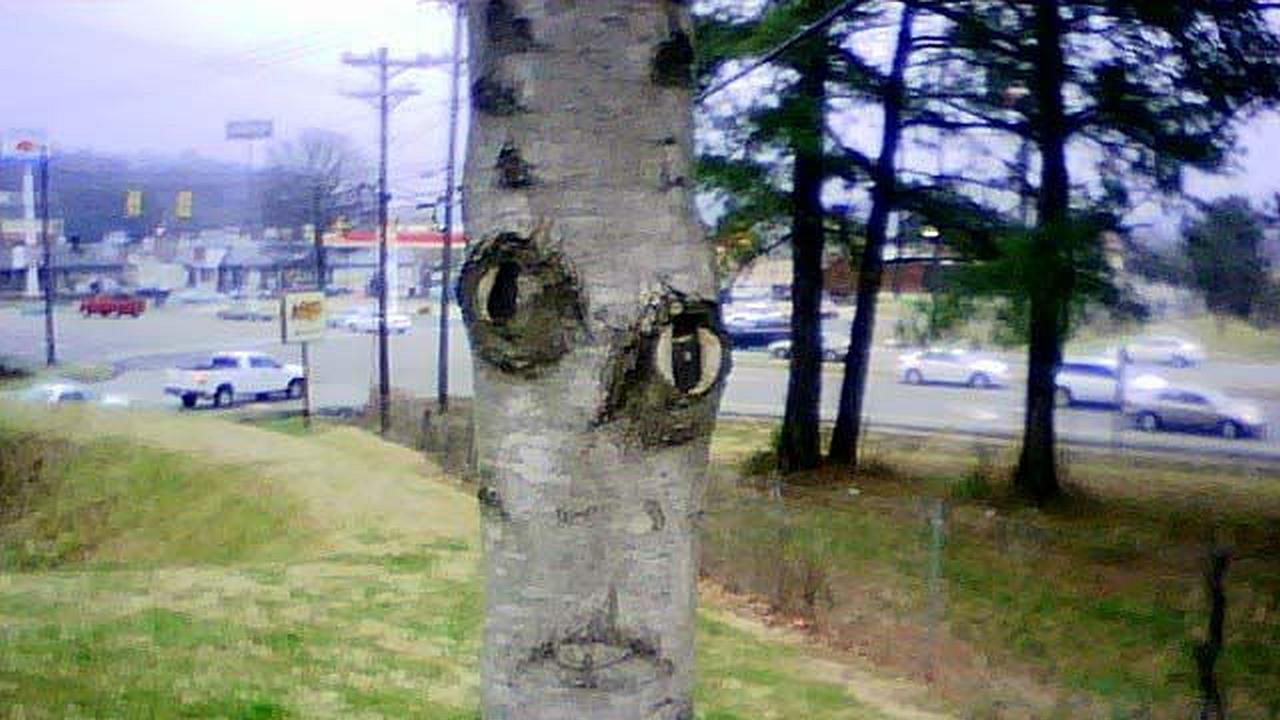 El tronco de un árbol con ojos nariz y boca muy decorado