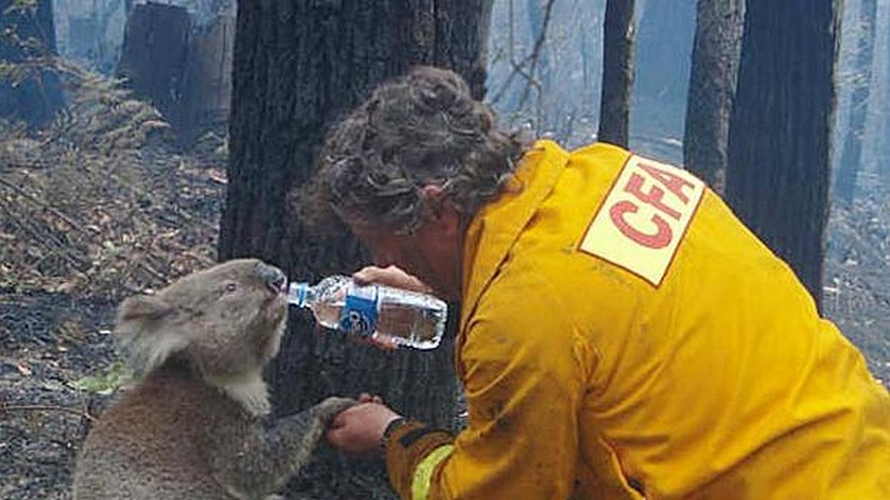 Un hombre le da agua a un koala en una botella mientras pasa el incendiio