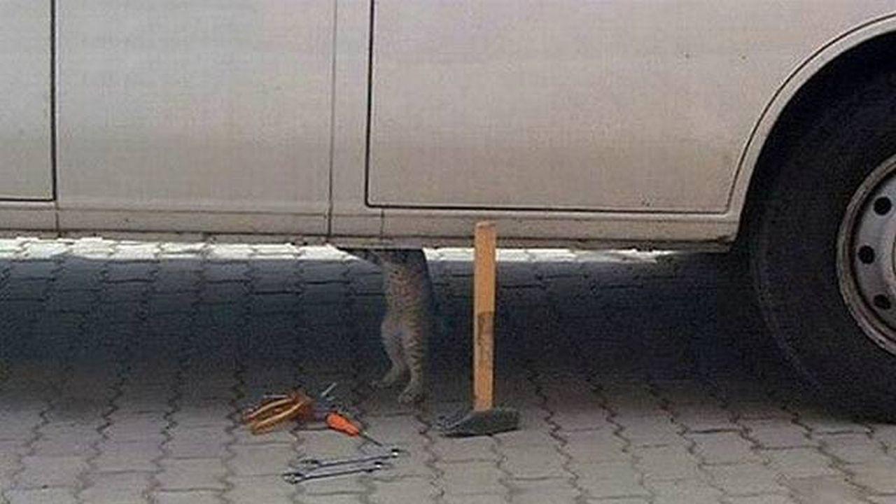 Un gato reparando un automóvil por debajo de el