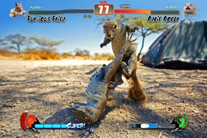 Una pelea de ardillas ilustrada como en un videojuego