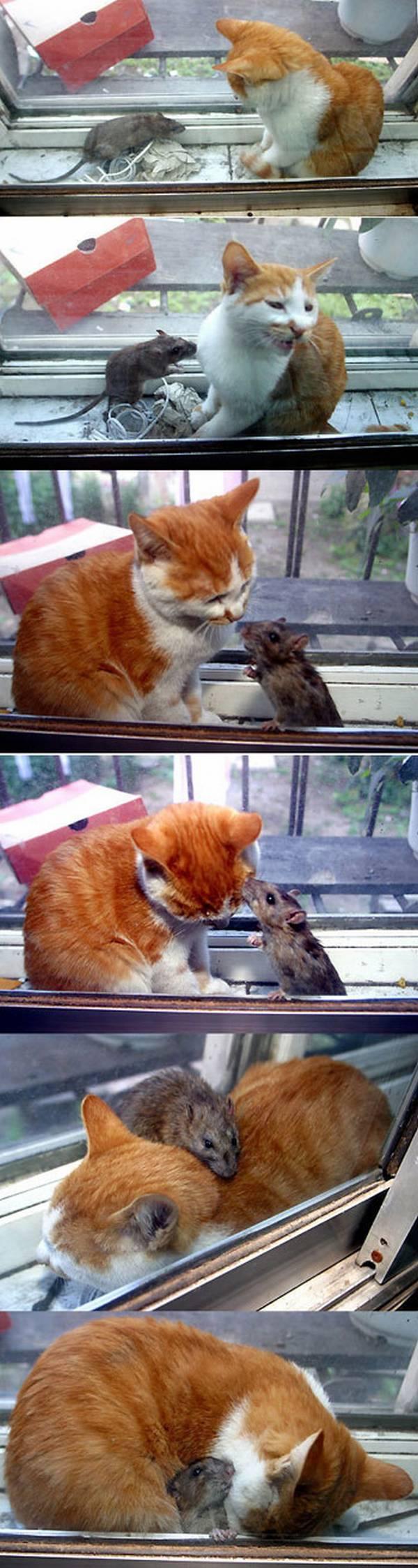 Un gato observando un raton, lo abraza, lo acaricia y lo besa