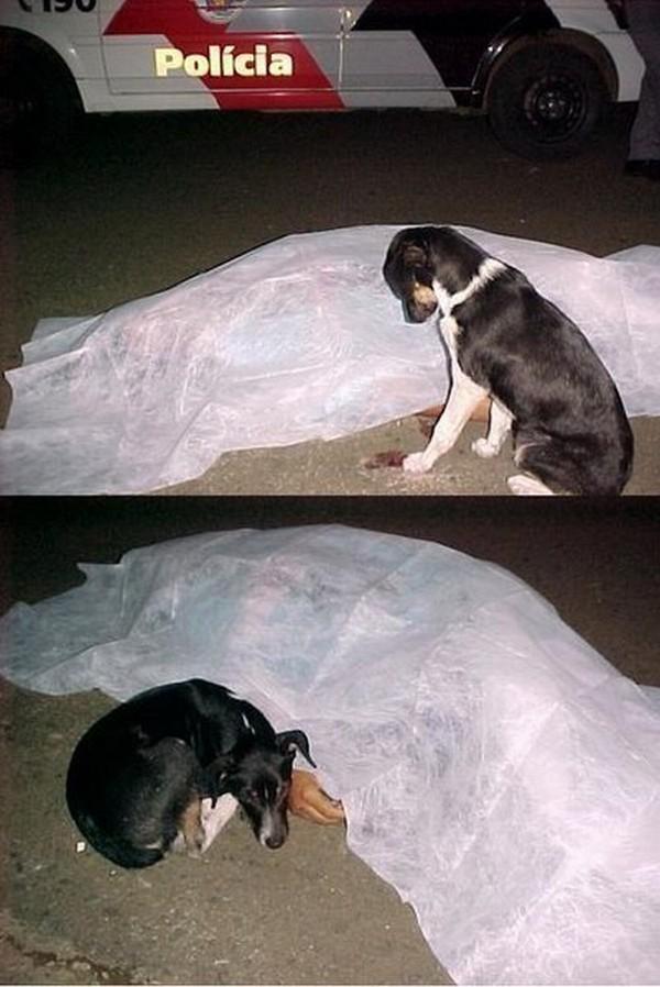 Un perro al lado de su amo que esta muerto y tapado