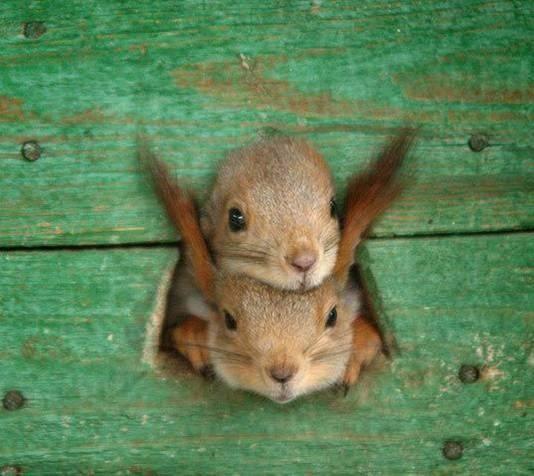 Dos animalitos con su cabeza afuera de un pequenño rotico