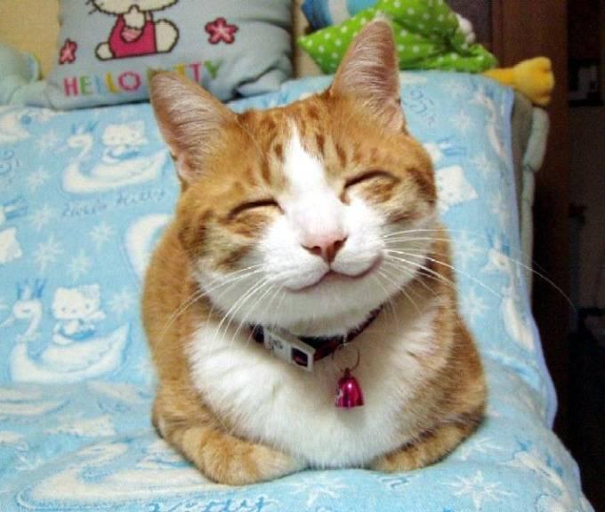 Un gato con los ojos cerrados y una gran sonrisa encima de una caja