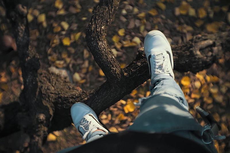 Tenemos aqui a un hombre subido en la rama de un arbol en suelo se ven multitud de hojas