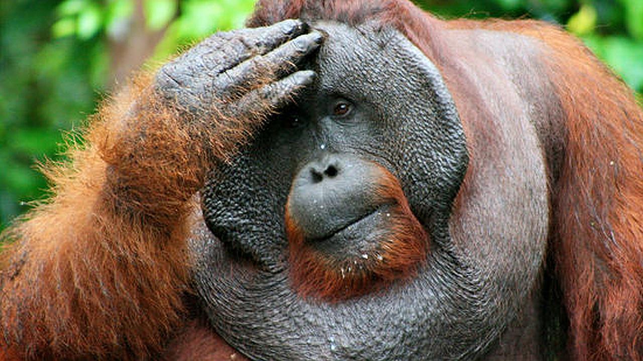 Ganese 6 billones de euros si cree que venimos del mono