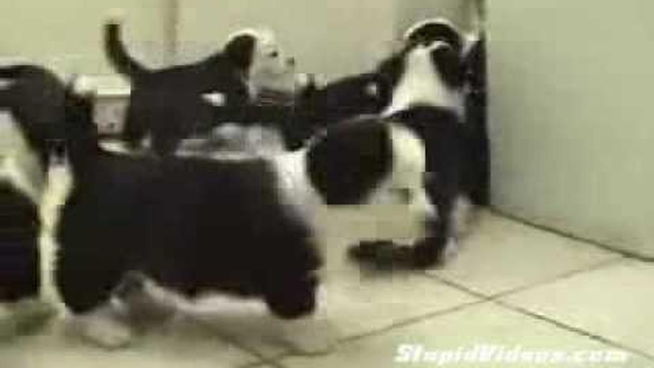 Gato Neo se enfrenta a cachorros Agentes Smith