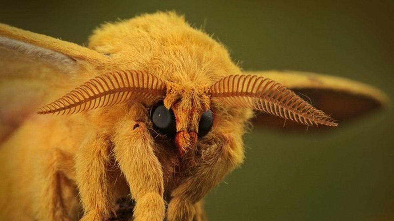 Insectos como usted nunca los ha visto antes