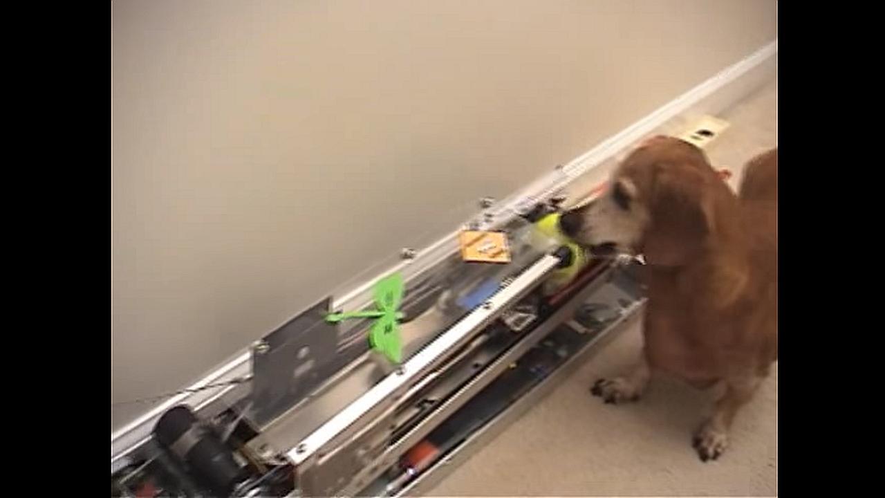 Jerry, el perro que no necesita ayuda para jugar con su pelota
