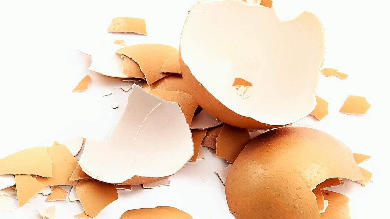 La cascara de huevo