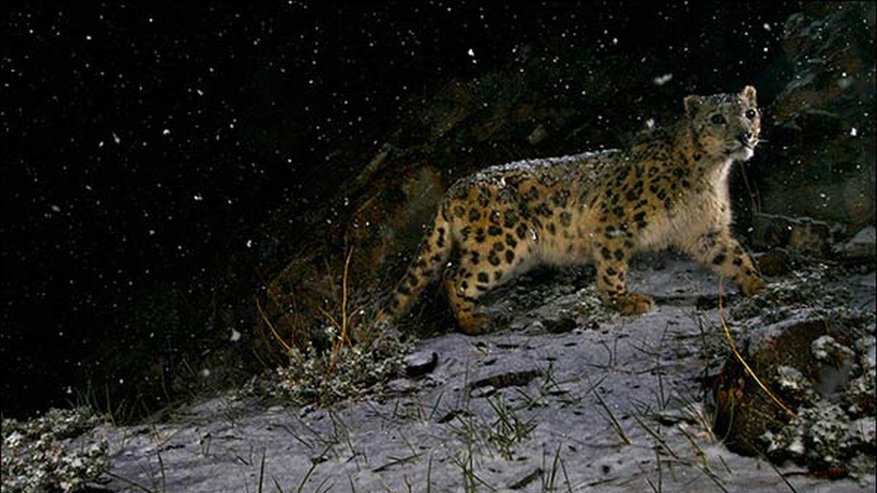 La mejor imagen de la vida salvaje según la BBC