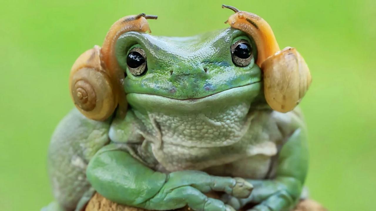La pizarra de la rana