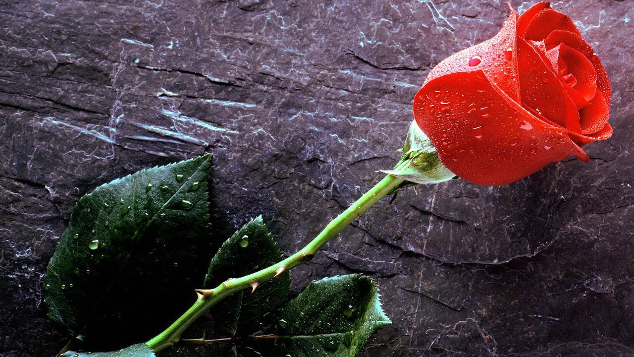 La rosa adentro