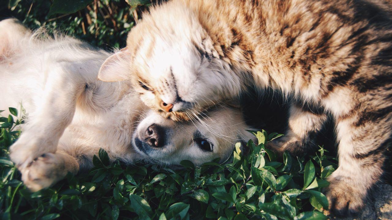 Las 10 Mascotas Más Deseadas por las Personas en el Mundo