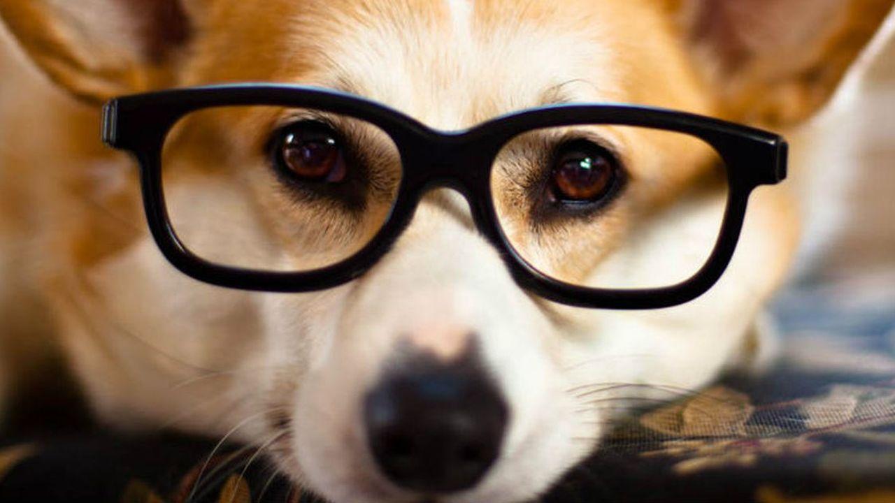 Las 10 Razas de Perros Más Inteligentes del Mundo Hoy
