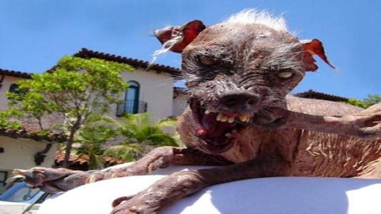 Muere el perro con el premio al más feo del mundo