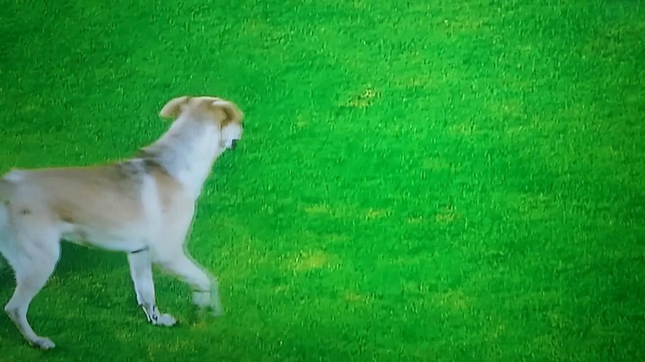 Perro invade cancha de fútbol y el público grita ¡OLE!