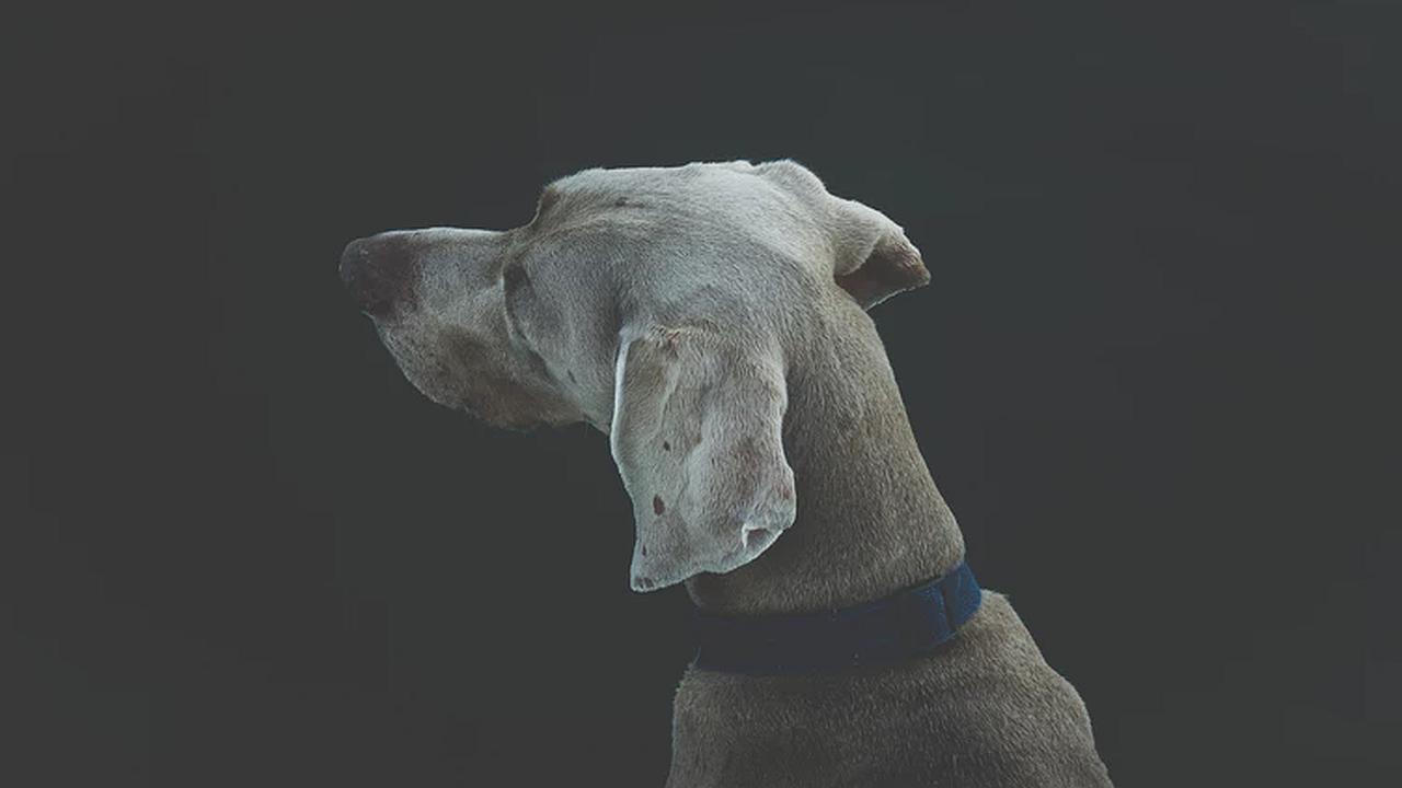 El perro que no se ha perdido una sola protesta callejera violenta