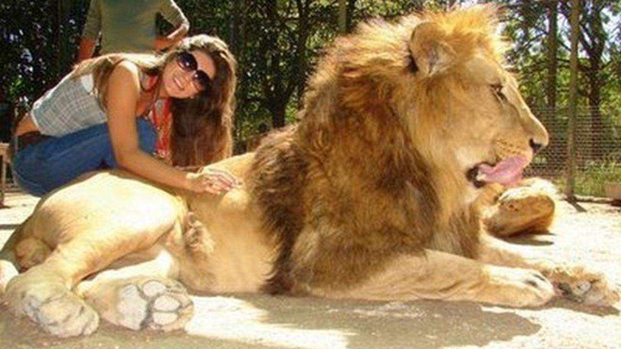 Si se lo comen, el zoológico no es responsable