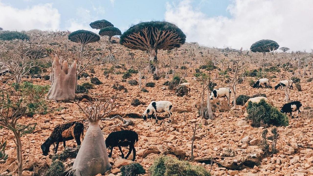 Socotra, una isla con un paisaje de otro mundo
