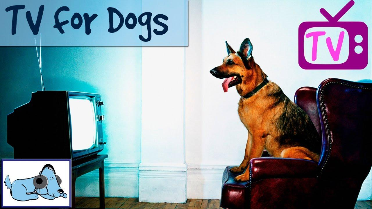 TV for dogs